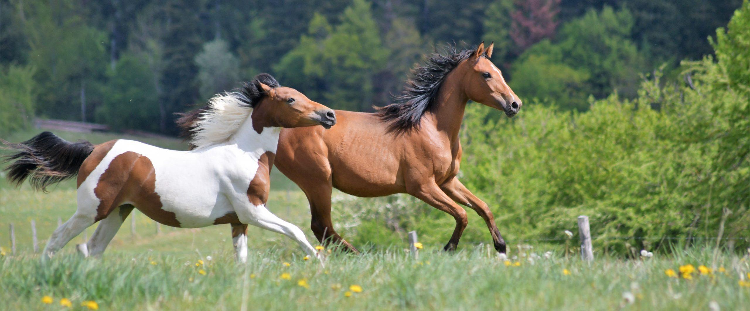 Haras de Niellans – Elevage & Centre équestre